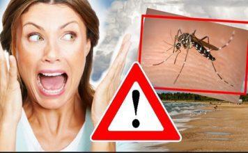 horucka komare