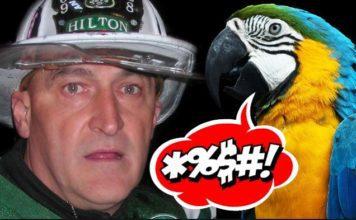 papagaj hasic
