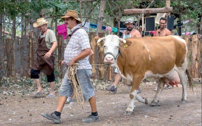 krava malina farma
