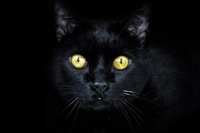 Čierna mačička dráždiť