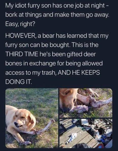 Medveď podplácajúci psa.