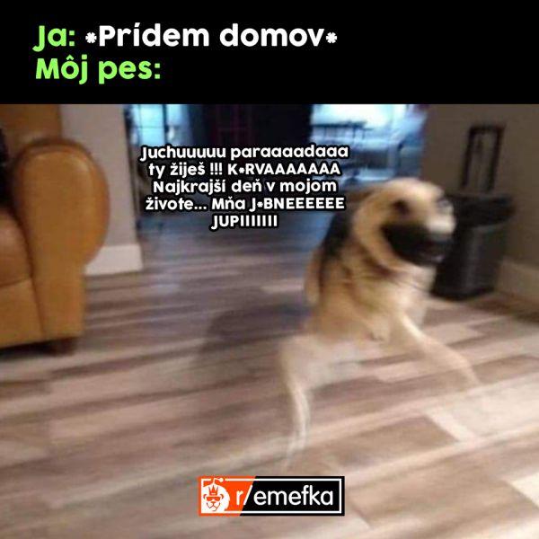 Meme tešiaci sa pes.