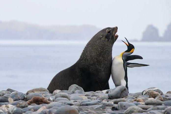 Tuleň a tučniak