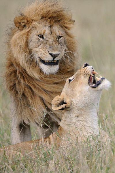 Lev a levica vtipná foto