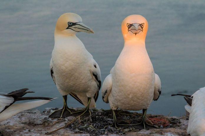 Vtáky vtipné foto