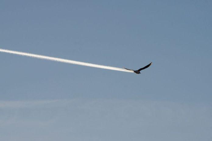 Vták a lietadlo