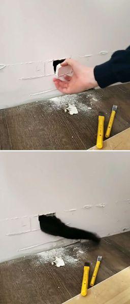 mačka v stene