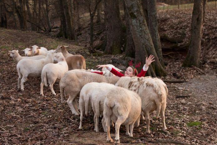 Vianočná pohľadnica ovce